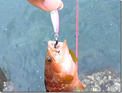メタルジグ釣れる理由