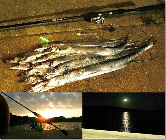 坊勢島タチウオフラップ釣法で入れ食い