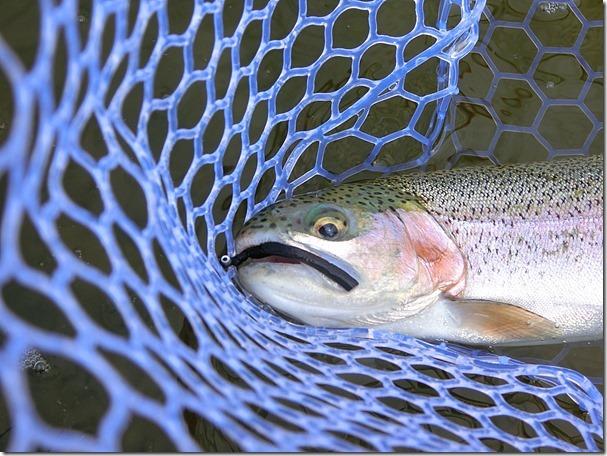 アクアヘブンにてフェザージグで釣る