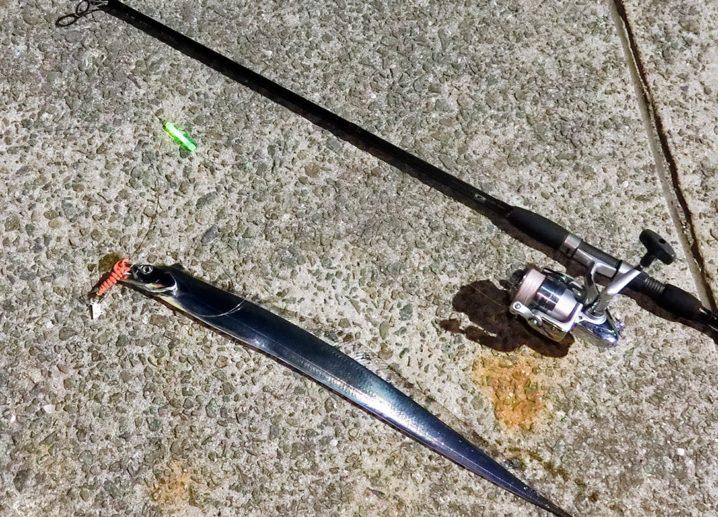フラップ釣法でタチウオが次々ヒット1
