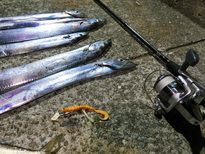 坊勢島タチウオの釣果
