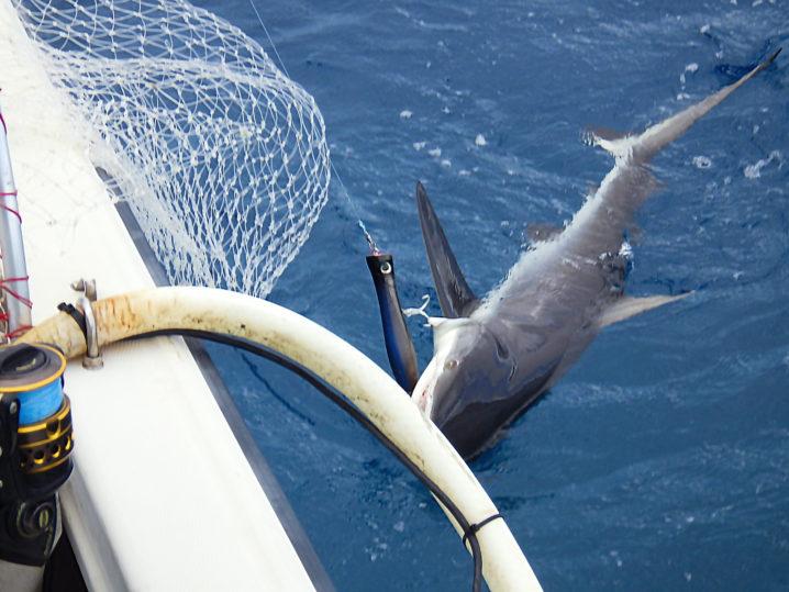 パラオGT釣りでサメが釣れてしまう