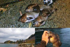 12月下旬の福井メバリングで爆釣!釣果と釣り方を紹介