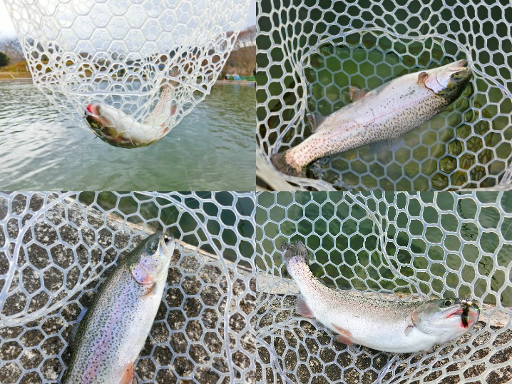 南郷水産センターのルアー・フライ釣り場釣果