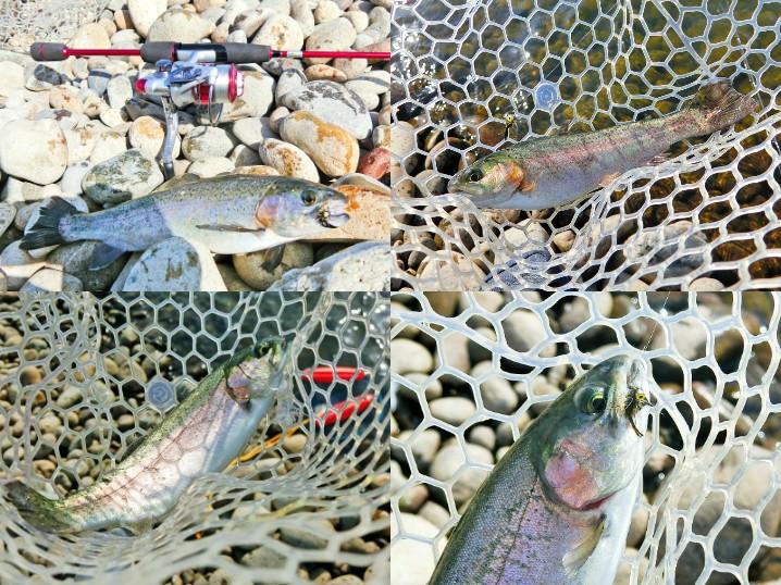 2月上旬の北方川釣り体験場の釣果