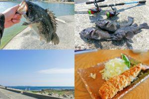 真冬にクロソイがたくさん釣れる釣り場とは