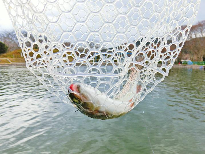 南郷水産センターのルアー・フライ釣り場でフェザージグを使いニジマスヒット4