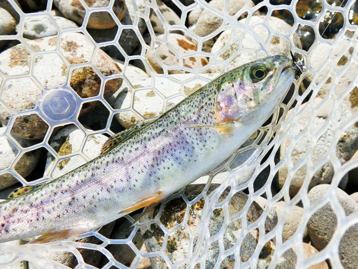 北方川釣り体験場はどのくらい釣れるのか