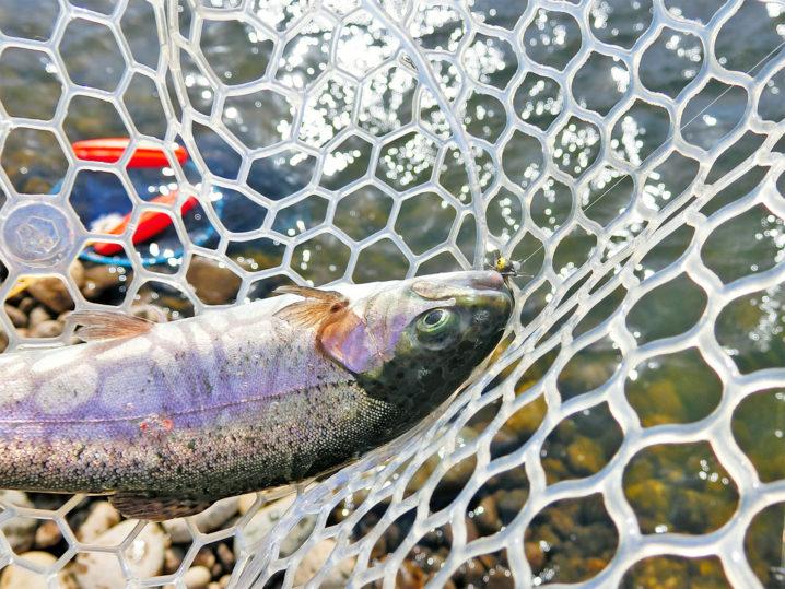 北方川釣り体験場でニジマスが入れ食いになる3