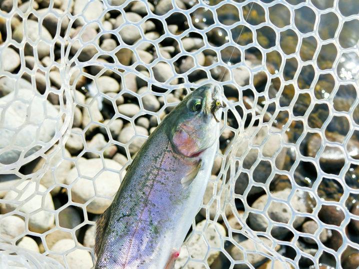北方川釣り体験場でニジマス爆釣1