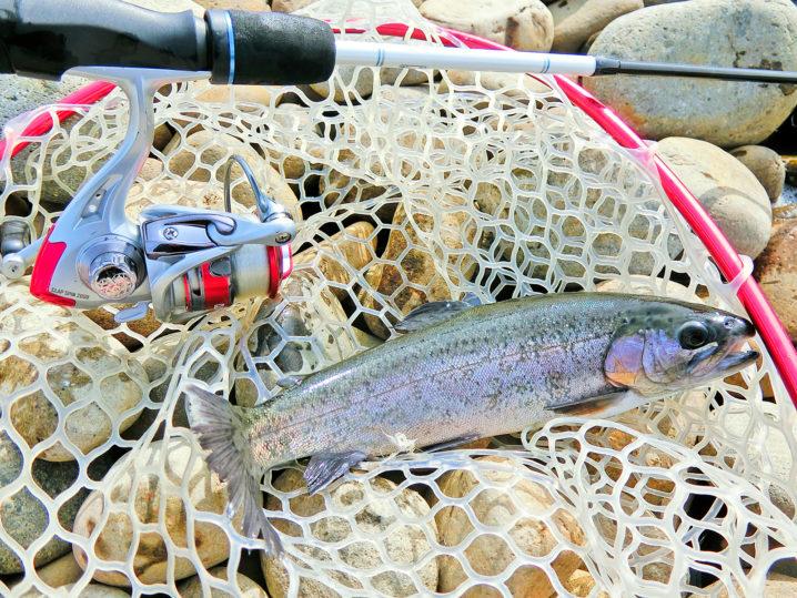 北方川釣り体験場でニジマス爆釣3