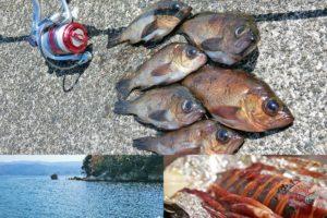 4月上旬福井敦賀デイメバリング釣行で好釣果|低水温時のポイントの選び方と釣り方を紹介