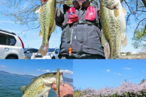 4月中旬バス釣り大会でウィードが無い琵琶湖南湖を攻略!50UPと4匹の40UP必釣パターンとは