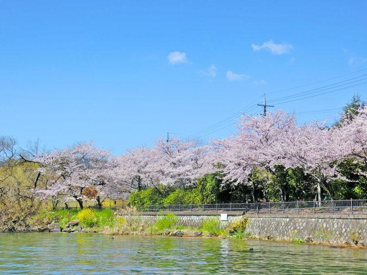 春の琵琶湖南湖ブラックバス釣り大会のルール