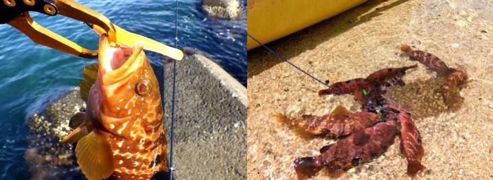 アコウ(キジハタ)のルアーでの釣り方一覧