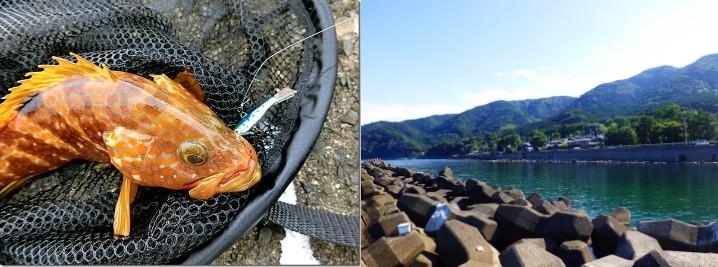 アコウ(キジハタ)をルアーで釣る為の時期・ポイント・釣り方