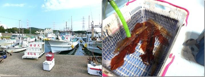 イカメタルのポイント(釣り船)の選び方