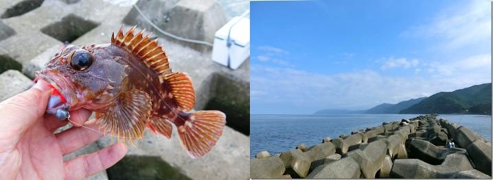 ガシラ(カサゴ)穴釣り釣行日記