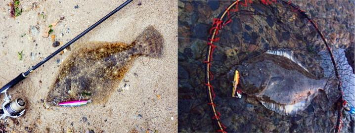 ヒラメをルアーで釣る為の釣り方一覧