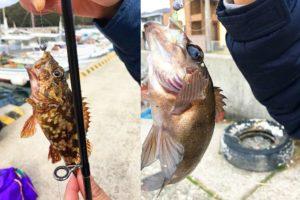 2019年2月上旬淡路島東部でガシラが爆釣!良型メバルの釣果も|当日のヒットパターンと以外なヒットワームを紹介