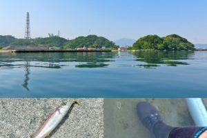 5月下旬福井県敦賀でルアーのキス釣り|マヅメを逃しピーカンベタ凪でも釣れる仕掛と釣り方を紹介