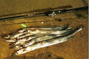 タチウオのルアー釣り入門|初心者向けタックル・ルアー・釣り方紹介