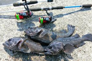 海上釣り堀ルアー釣り入門|初心者向けタックル・ルアー・釣り方紹介