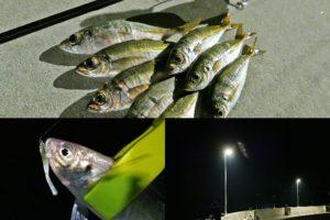 6月上旬坊勢島アジングがシーズンインで20UPのアジが入れ食い!開幕時期を知る方法と釣り方を紹介