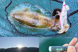 6月中旬福井春エギングでアオリイカをゲット!朝一の短時間で釣る為のエリア・ポイント・釣り方を紹介