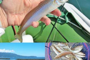 6月中旬福井県敦賀でルアーのキス釣り|肘たたきサイズを含む20cmオーバーが連発!釣り方とヒットルアーを紹介