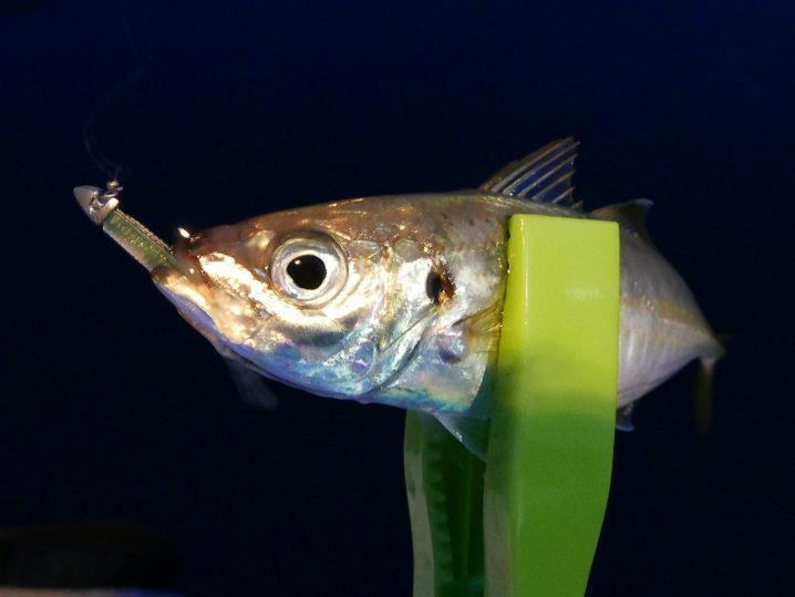 まずは【釣れ釣れグリーン】で連続ヒット!