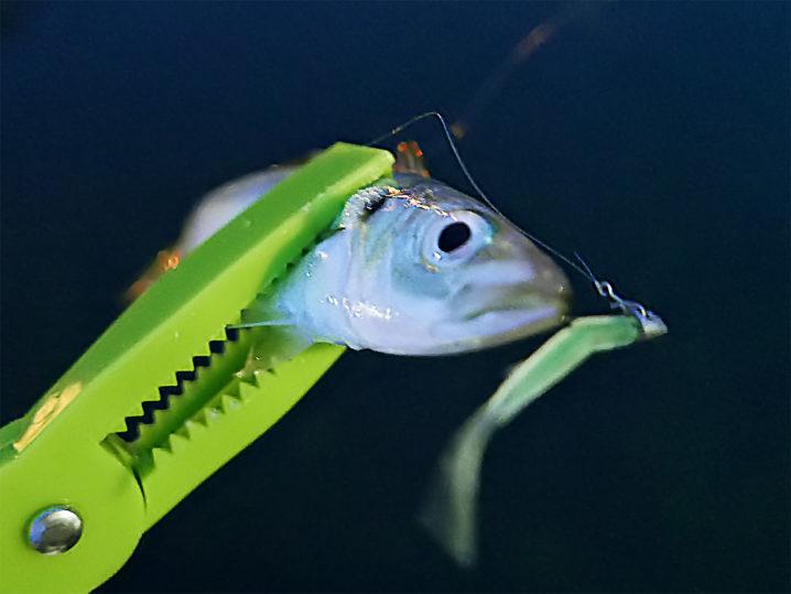 まずは【釣れ釣れグリーン】で連続ヒット!2