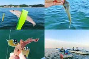 6月下旬愛知県知多半島でルアーのキス釣り好釣果!手軽に手堅く釣る為の方法を紹介