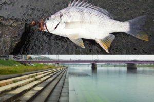 広島の太田川放水路でチニング|当日の釣果・釣り方・釣り場の特徴を紹介