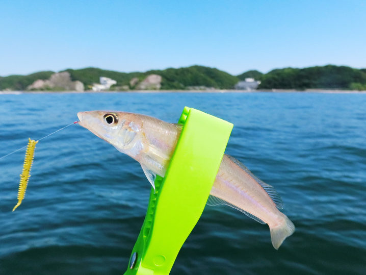 昼過ぎまでキス釣りをして終了