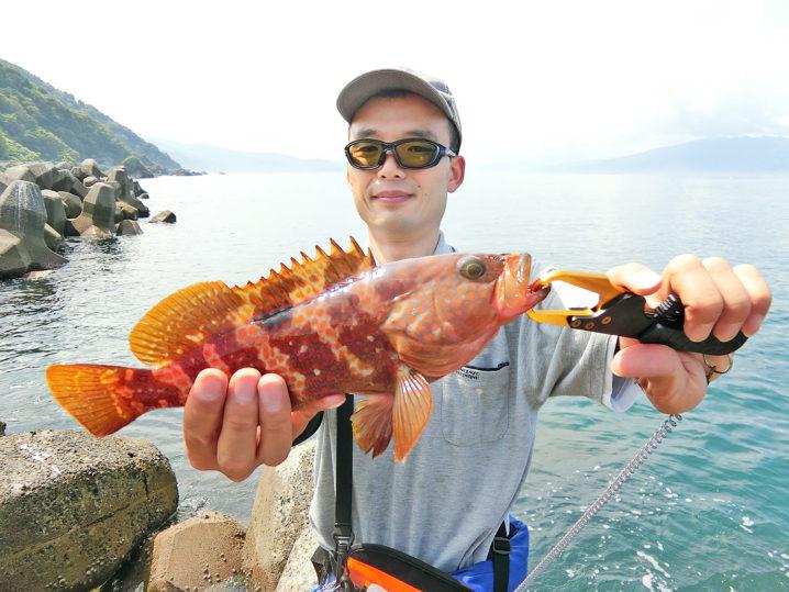 2019年7月下旬福井越前アコウ(キジハタ)ルアー釣行|濁り・低水温攻略法と爆釣シーズンインはいつか?の考察も