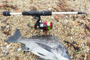 7月上旬兵庫県西宮の甲子園浜チニングで5枚の釣果|ヒットパターンとルアーを紹介