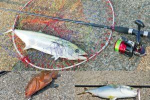 8月上旬兵庫県神戸の和田防でショアジギング|サワラ・ツバス・アコウと合計10匹と爆釣!釣り方のコツとヒットルアーを紹介