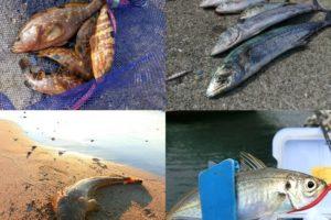 8月にライトルアーフィッシングで釣れる魚種とその釣り方