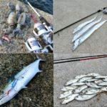 9月の初秋にライトルアーフィッシングで釣れる魚種とその釣り方
