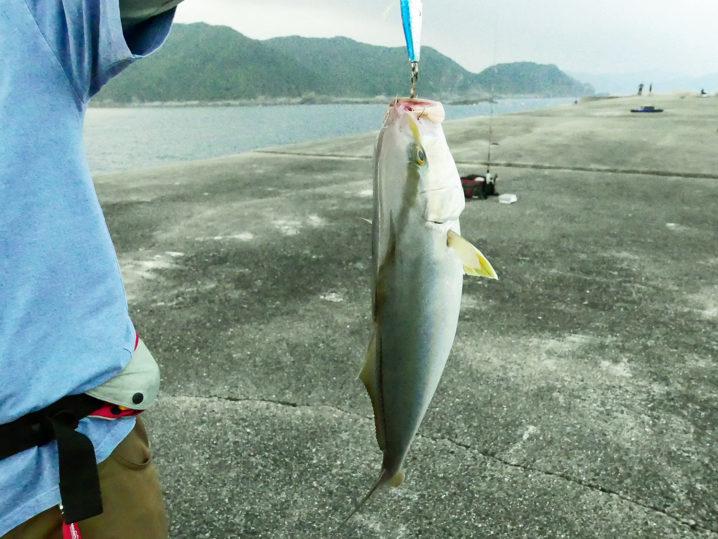釣れ釣れさんが【シオ(カンパチの子供)】をショアジギングで釣り上げる!2