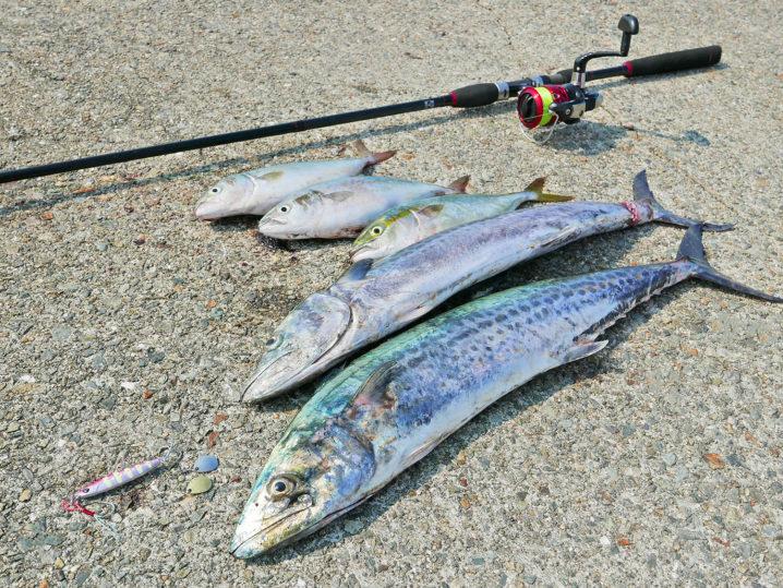 8月上旬兵庫県神戸の和田防ショアジギング釣果
