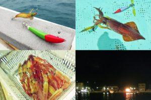 8月中旬福井敦賀イカメタル|年1回釣行で竿頭に次ぐ61杯の釣果となった釣り方とコツとは