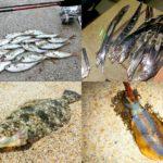 10月の秋にライトルアーフィッシングで釣れる魚種とその釣り方