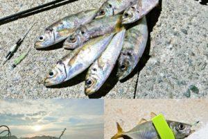 8月下旬坊勢島アジングで好釣果|ジグヘッドとキャロライナリグの使い分け方も紹介
