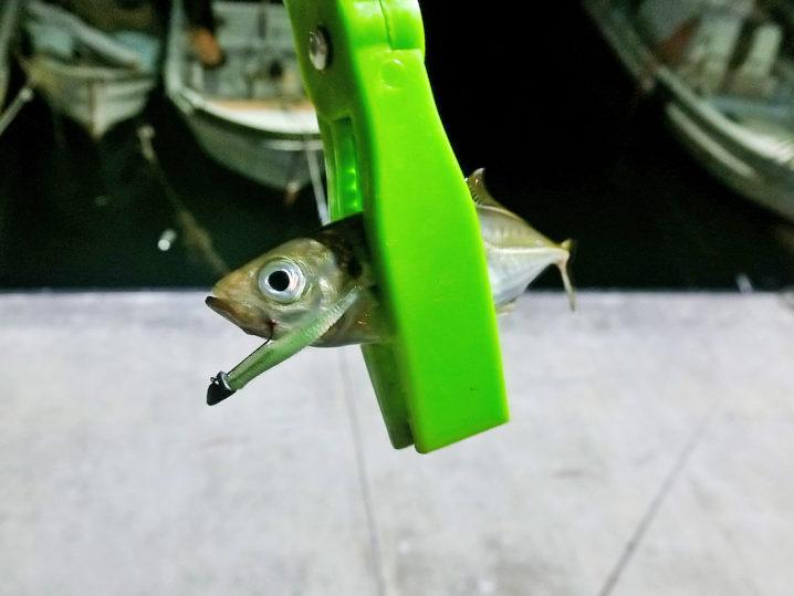 釣れ釣れグリーンとアジリンガーどちらが釣れるか検証しました