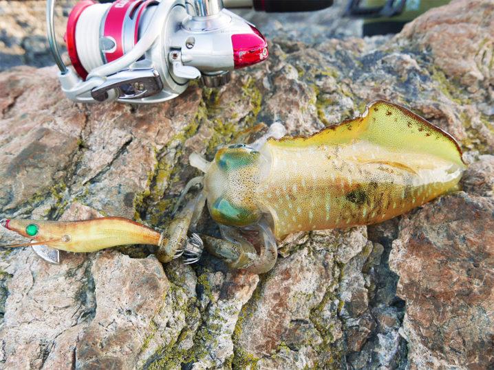 順調にアオリイカが釣れだすも、2号エギを全ロスト!