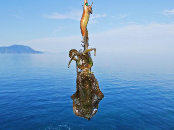 順調にアオリイカが釣れだすも、2号エギを全ロスト!2