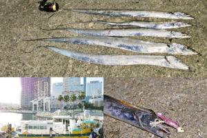 9月中旬神戸和田防にてルアーでタチウオ好釣果|2019年の傾向と釣り方を紹介