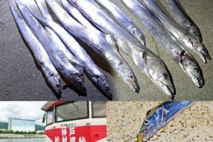 9月下旬神戸7防タチウオ釣りでドラゴン複数釣果!|テンヤで足元狙う際の釣り方・ルアーを紹介